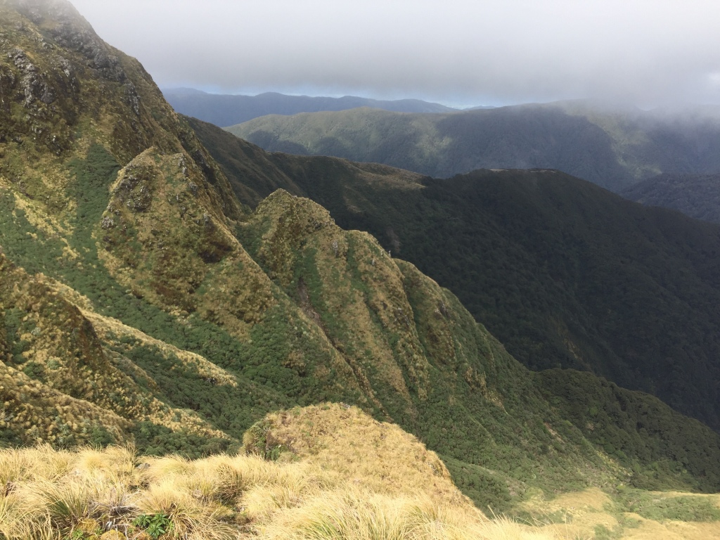 Tararua Range: Or Where I Learned to Stop Worrying and Love the Cows